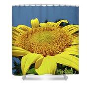 Sunflower Garden Art Print Yellow Summer Sun Flower Baslee Shower Curtain