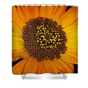 Sunflower Glory Shower Curtain
