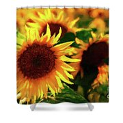 Sunflower Glory Shower Curtain