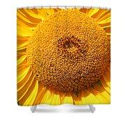 Sunflower Head  Shower Curtain