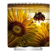 Sunflower Heaven Shower Curtain