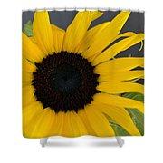 Sunflower II Shower Curtain