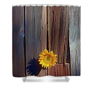 Sunflower In Barn Wood Shower Curtain
