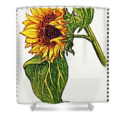 Sunflower In Gouache Shower Curtain
