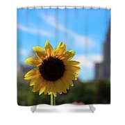 Sunflower In Providence Shower Curtain