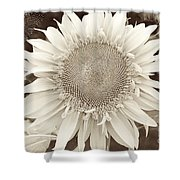Sunflower In Soft Sepia Shower Curtain