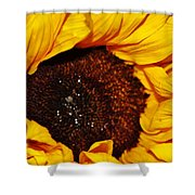 Sunflower In The Sun Shower Curtain