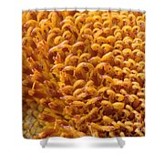 Sunflower Macro Shower Curtain