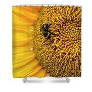 Sunflower Macro Shower Curtain