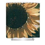 Sunflower Matte Shower Curtain
