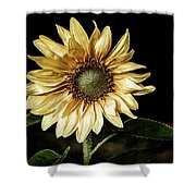 Sunflower Modified Shower Curtain