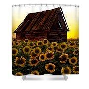 Sunflower Morning With Barn Shower Curtain