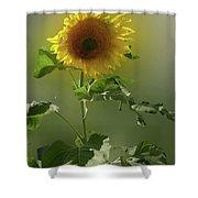 sunflower No. 10 Shower Curtain
