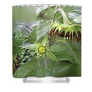 sunflower No.7 Shower Curtain
