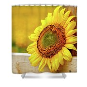 Sunflower On The Fence Shower Curtain
