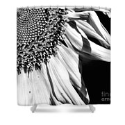 Sunflower Petals In Black And White Shower Curtain