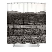 Sunflower Plot Shower Curtain