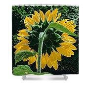 Sunflower Rear Shower Curtain
