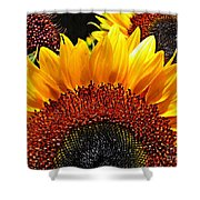 Sunflower Rise Shower Curtain