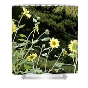 Sunflower Sea Of Happiness Shower Curtain