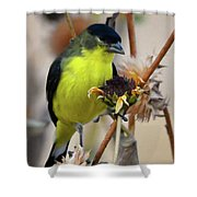 Sunflower Seed Snack Shower Curtain
