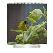 Sunflower Seed Tasting Shower Curtain