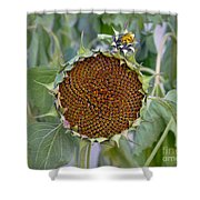 Sunflower Seedhead Shower Curtain