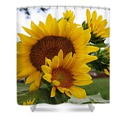 Sunflower Show Shower Curtain