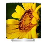 Sunflower Side Light Shower Curtain