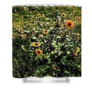 Sunflower Stalks Shower Curtain