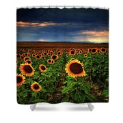 Sunflower Storms Shower Curtain