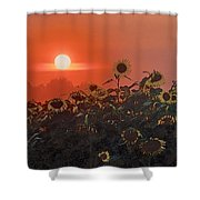 Sunflower Sundown Shower Curtain
