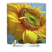 Sunflower Sunlit Sun Flowers 6 Blue Sky Giclee Art Prints Baslee Troutman Shower Curtain