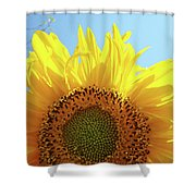 Sunflower Sunlit Sun Flowers Giclee Art Prints Baslee Troutman Shower Curtain