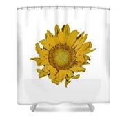 Sunflower T Shower Curtain