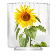 Sunflower Watercolor Shower Curtain