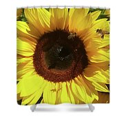 Sunflower With Bees Shower Curtain