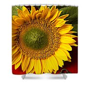 Sunflower With Old Key Shower Curtain