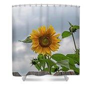 Sunflowers 2018-1 Shower Curtain