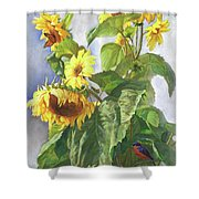 Sunflowers After The Rain Shower Curtain