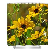 Sunflowers Along The Trail Shower Curtain