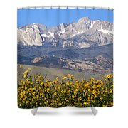 2a6742-sunflowers And Mount Humphreys  Shower Curtain