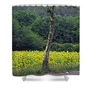 Sunflowers And Trees Growing Shower Curtain