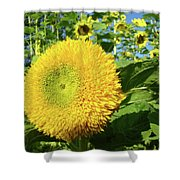 Sunflowers Art Prints Sun Flower Giclee Prints Baslee Troutman Shower Curtain