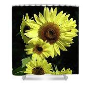 Sunflowers Art Yellow Sun Flowers Giclee Prints Baslee Troutman  Shower Curtain