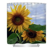 Sunflowers Close Up Shower Curtain