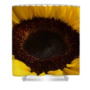 Sunflowers - Helianthus Shower Curtain