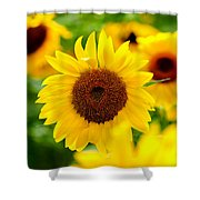 Sunflowers I Shower Curtain