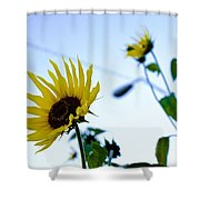 Sunflowers In Fall Shower Curtain