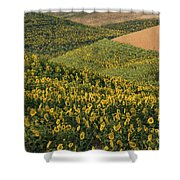 Sunflowers In The Palouse Shower Curtain